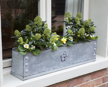 Garden PR Arthur Jack window box