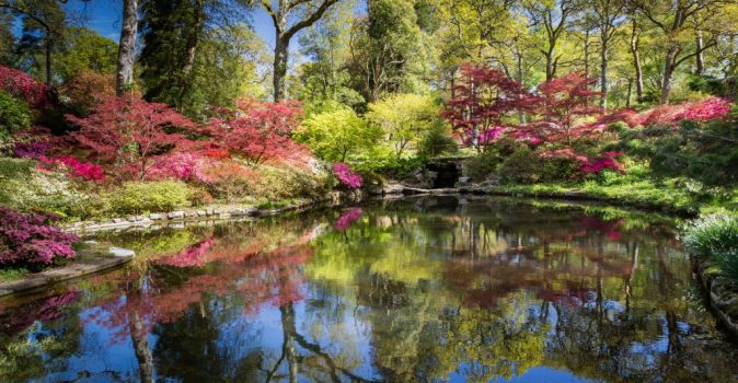 Wild Exbury: Nature-friendly focus for visitors at New Forest's Exbury Gardens in 2020