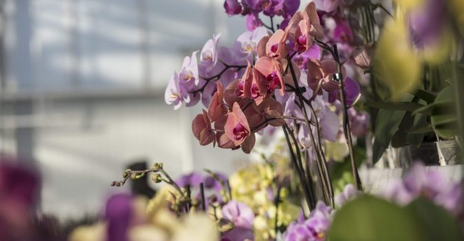 Colourful orchids ©Love Orchids