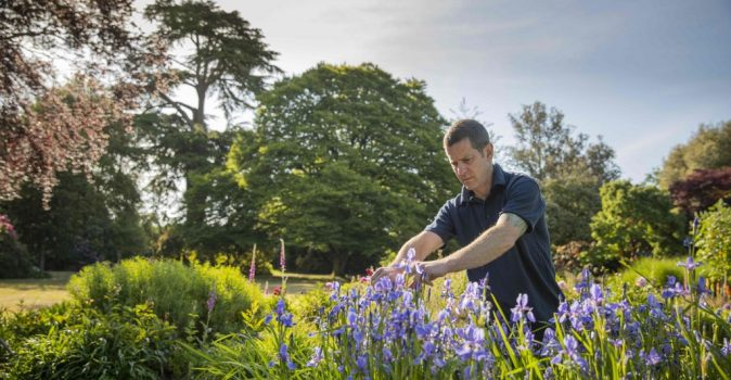 Exbury's head gardener Thomas Clarke tending the flag irises which are in full bloom