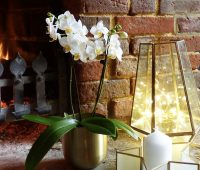 Luxury British-grown orchid Christmas gifts delivered direct to loved ones or home