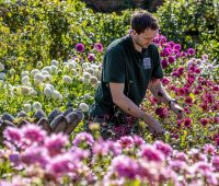 Rock garden rarities and dazzling dahlias to entice at Newby Hall in 2021