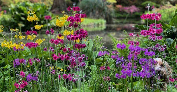 Exbury Gardens spring 2021